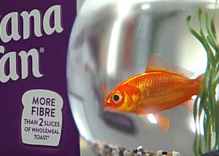 Is this animated goldfish gay?