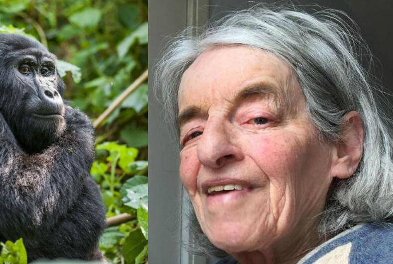 Scottish council candidate compares being gay to her attraction to gorillas