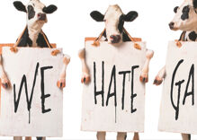 The Great Gay Chick-fil-A War is expanding into Canada now