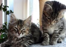 A lesbian couple held a 'kitten hour' at their wedding instead of a cocktail hour
