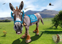 Are there any Democrats left who are NOT running for president?