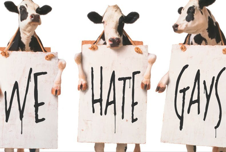 Chick-fil-A cows holding signs that say