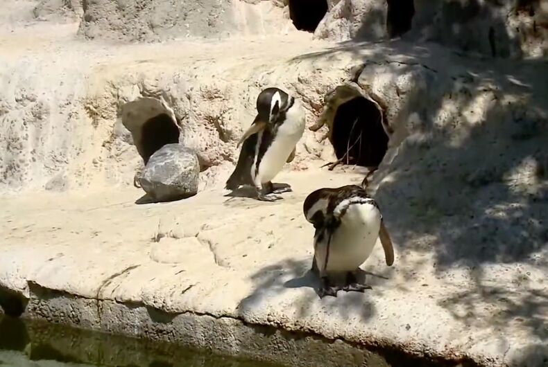 Eduardo and Rio are the best parents at the San Francisco Zoo