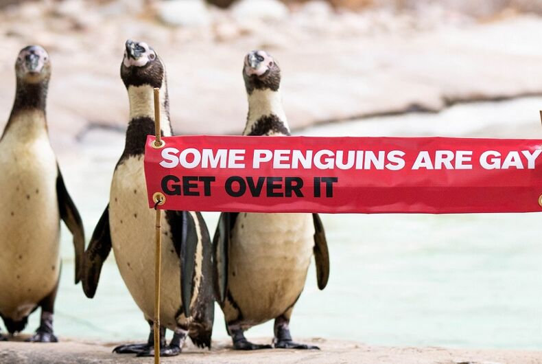 Penguins with a Pride sign