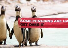 A Catholic journalist exploded in rage over gay penguins at the zoo