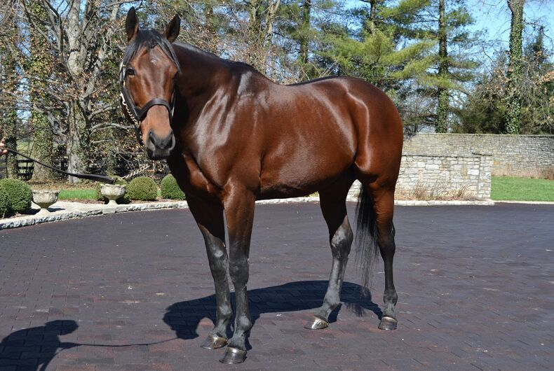 American Pharoah, the horse.
