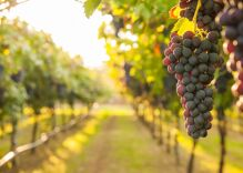 California winery reverses ban on same-sex weddings after a reporter proved they discriminate