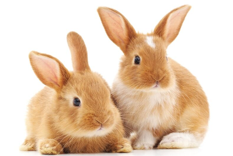 Just two rabbits, being rabbit
