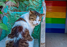 The weird, wonderful relationship between Istanbul and its cats